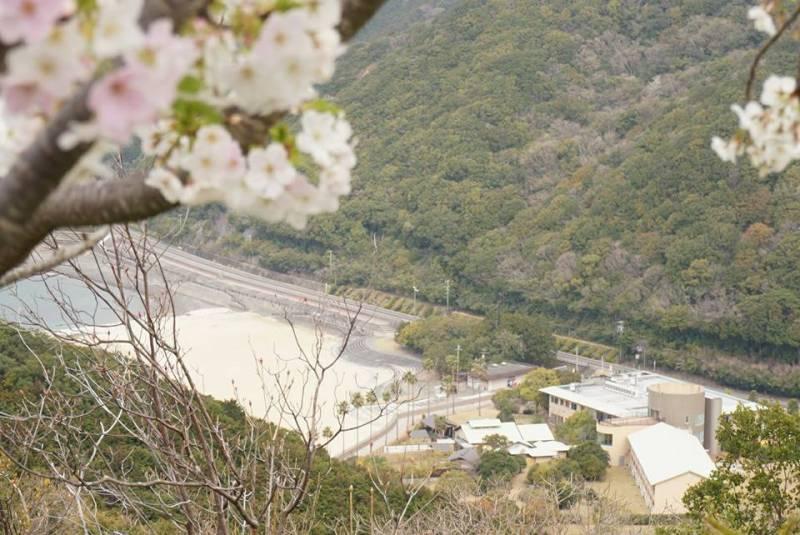 遊歩道から見る【桜と季の座】