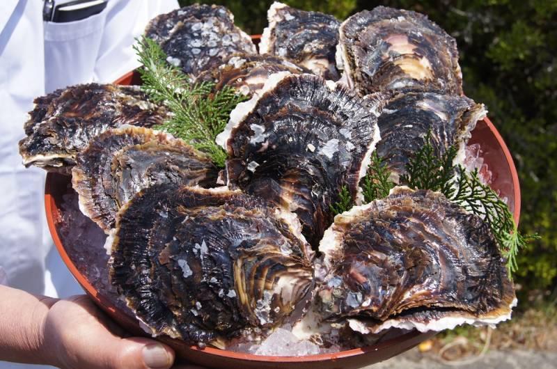 初物の岩牡蠣