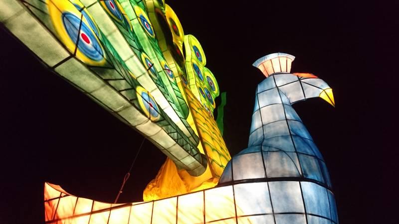 巨大燈籠:光明孔雀