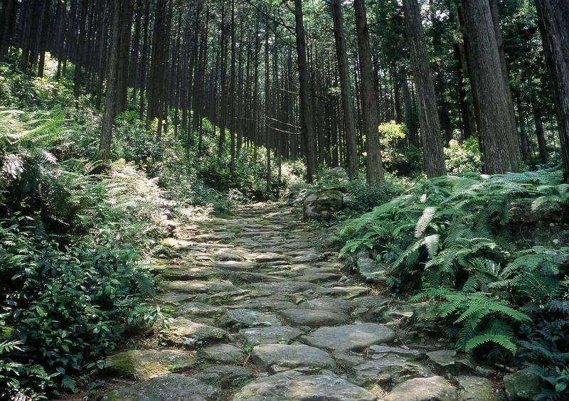 世界遺産「熊野古道」への無料送迎やっています!