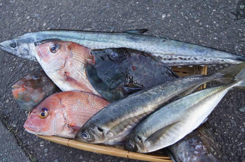 本日仕入れた鮮魚たち