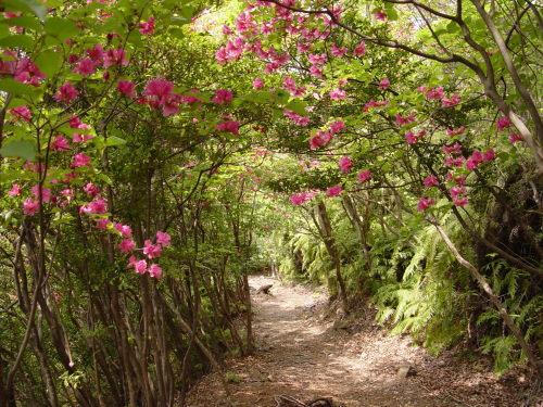 伊勢神宮と熊野三山を結ぶ道「世界遺産熊野古道の伊勢路」。当館では荷坂峠・ツヅラト峠・始神峠・馬越峠の4コースへ無料送迎やっています!※3日前予約