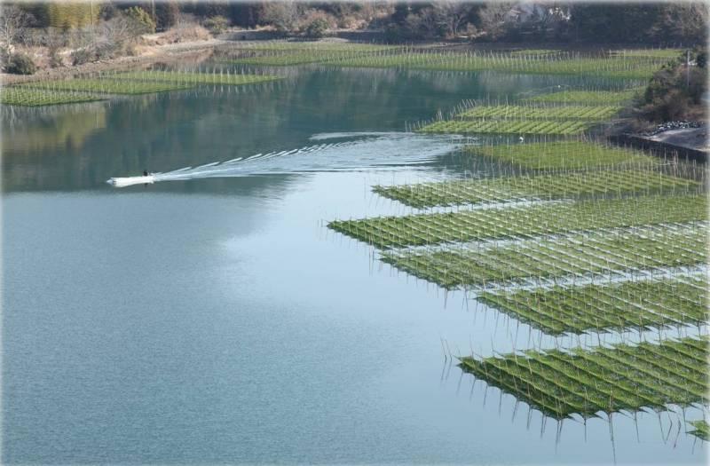 生産量全国一!栄養豊富で「海の緑黄色野菜」とも呼ばれる【あおさのり】収穫のシーズン!冬の風物詩!