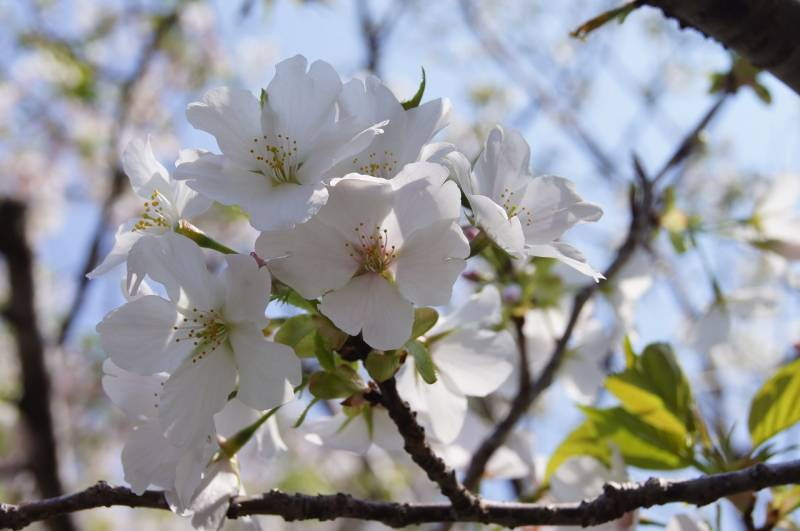 春は訪れている。