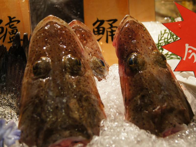 キュートなワニゴチ (鰐鯒)