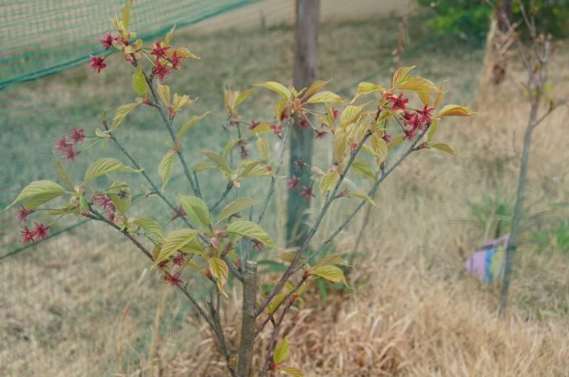 グラウンド内(オーストラリア団体様植樹)