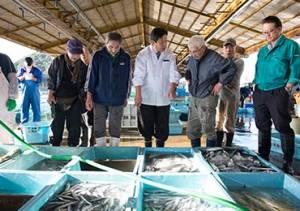 【通年】紀伊長島港(魚市場)